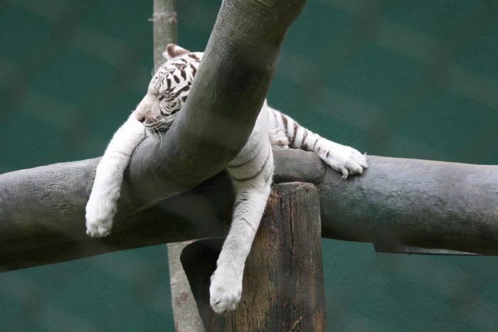 dormir au sommet d'un arbre