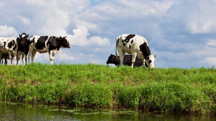 vivre fermier vacances ferme