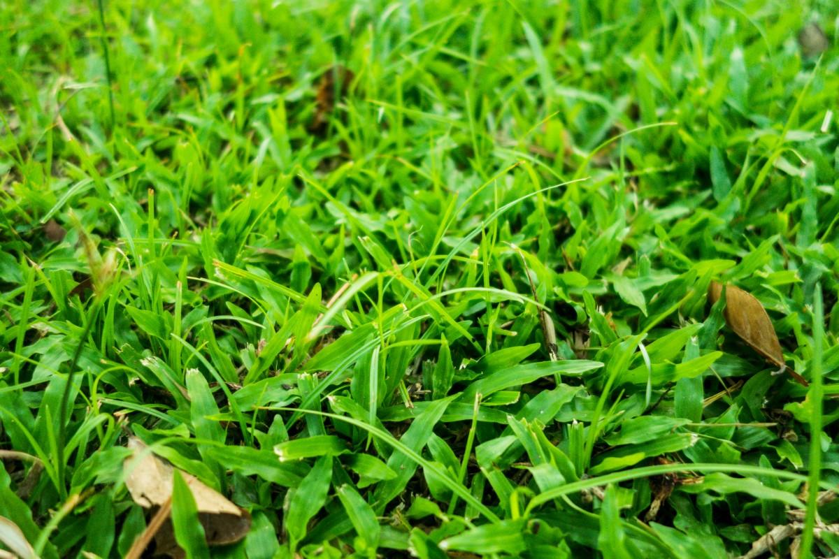 nourrir pelouse