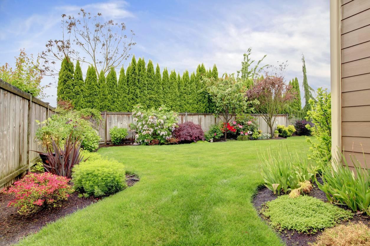jardin plantes extérieur